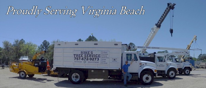 Virginia Beach Tree Service