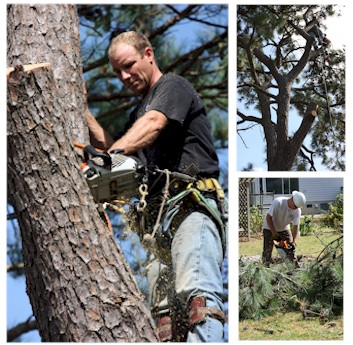 Virginia Beach Tree Trimming