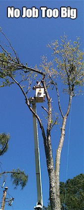 Tree Removal Va Beach